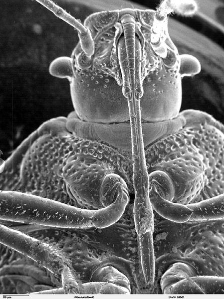 insectcloseup