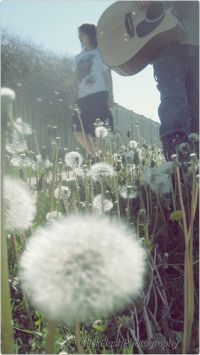guitar and dandelion