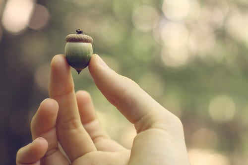 acorn in hand