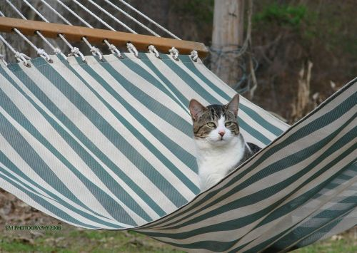 cat in a hammock not giving a shit