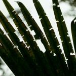 foliage in ecuador