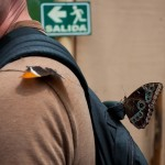 butterflies on backpack