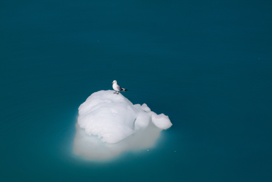 iceberg with bird